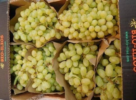 Grapes White Seedless - Box