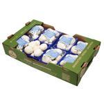 Mushroom Oman - Box