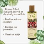 EO Laboratorie Organic Argan oil restoring & repairing shampoo for damaged & colored hair