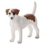 Mojo Jack Russell Terrier
