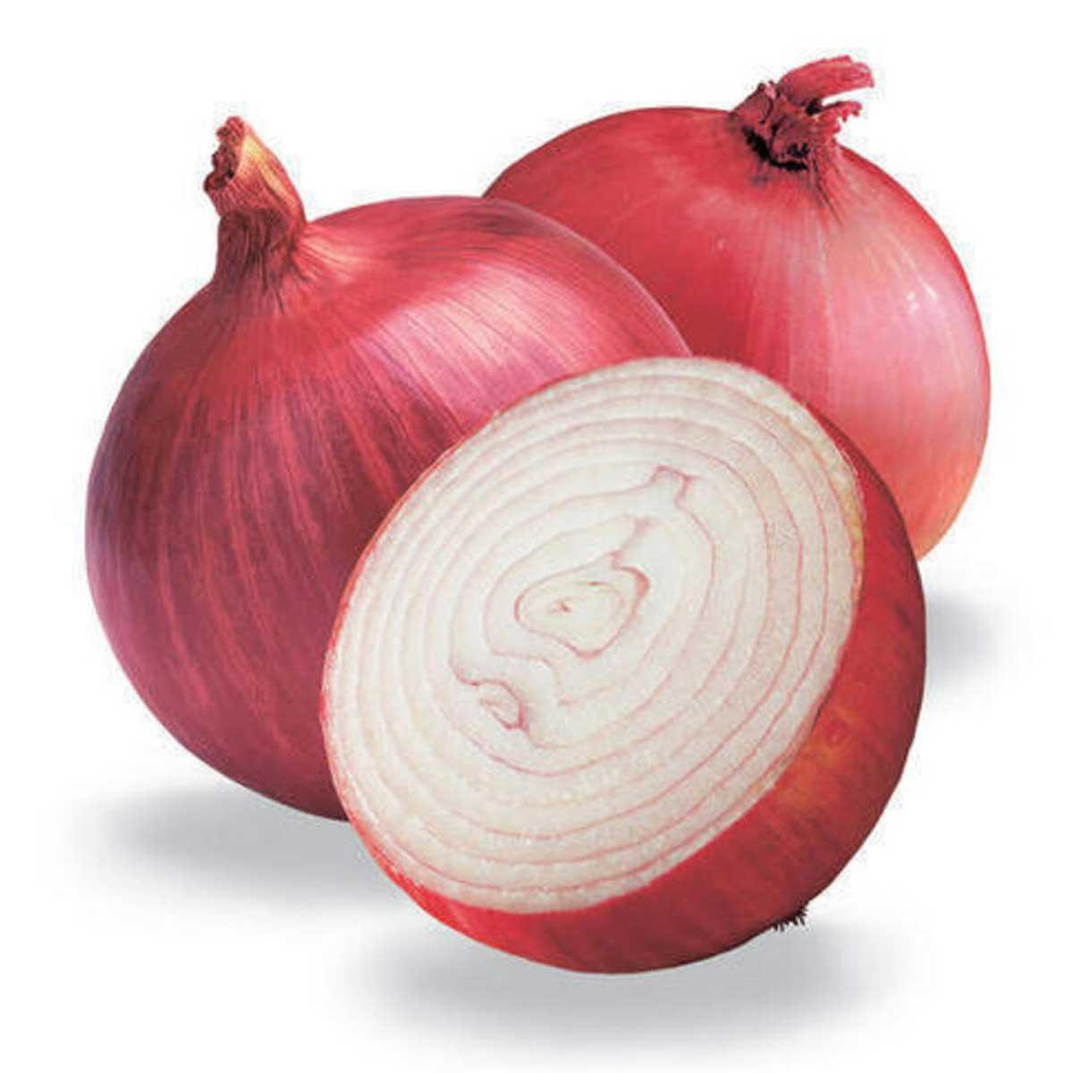 Onion Red India