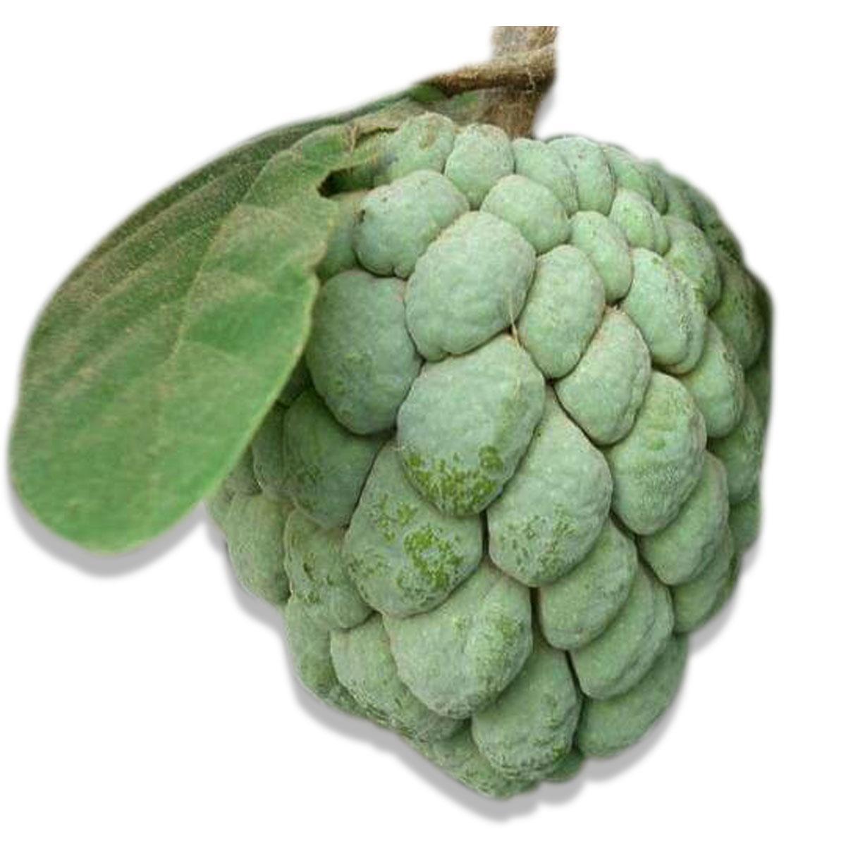 Custard Apple Kenya