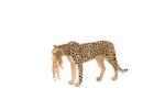 Mojo Cheetah Female With Cub New Colour 2017