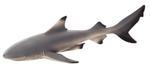 Mojo Black Tip Reef Shark  Portugal