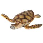 National Geographic Sea Turtle