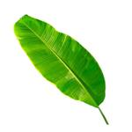 Banana Leaf Cut